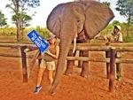 Elephant Camp Zimbabwe